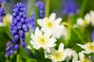Spring Flowers 2 by marmit