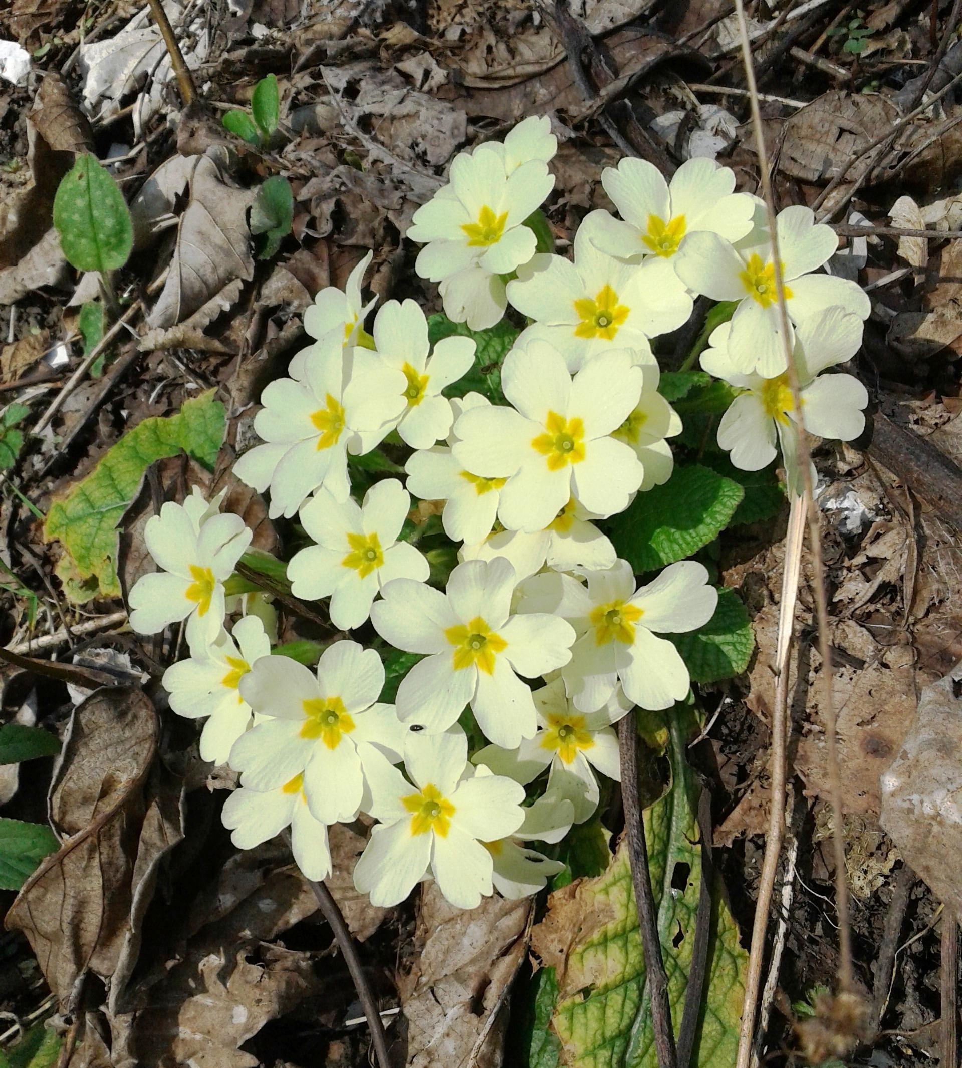 Fiori Selvatici Foto E Nomi primavera in città, primavera in collina – a casa di bianca