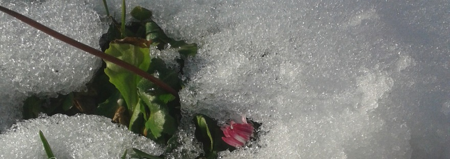 fiori nella neve