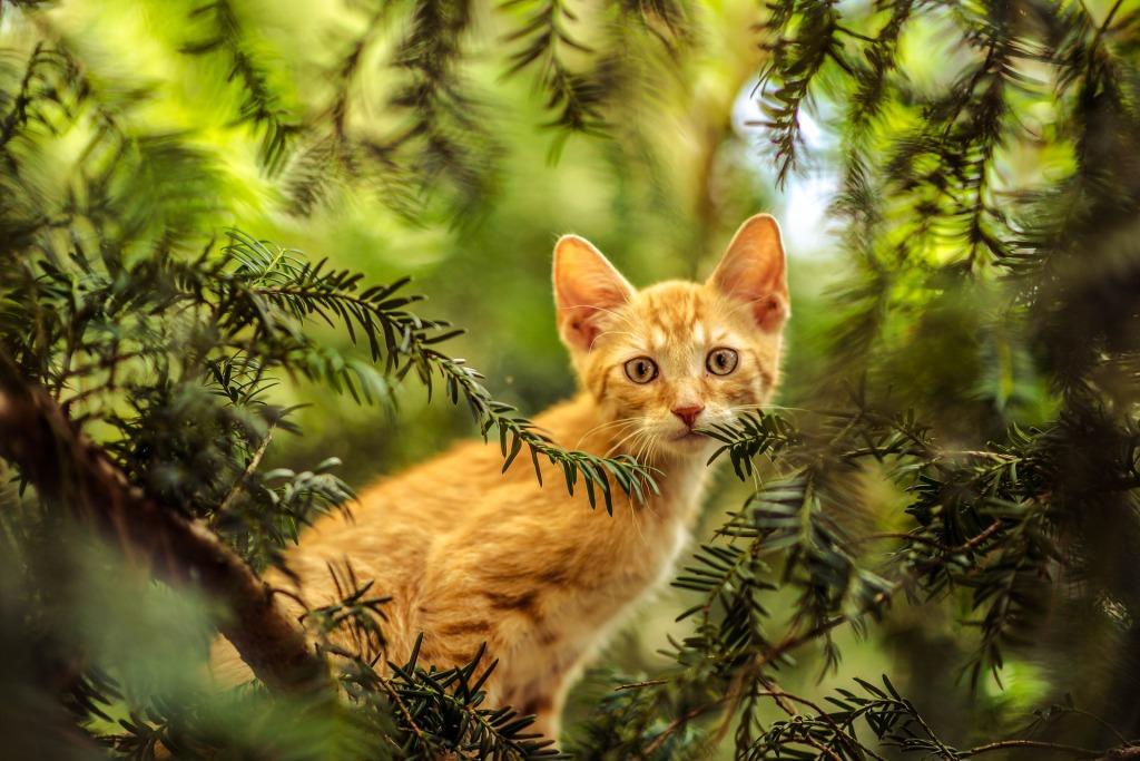 gatto rosso, pixabay, a casa di Bianca, festa nazionale del gatto