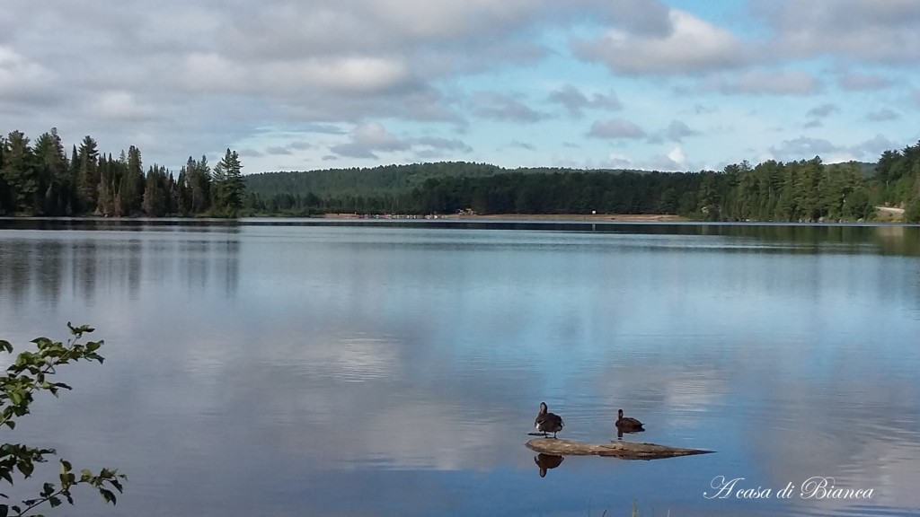 Canada Algonquin Park lake of two rivers