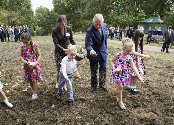 Prince Charles coronation meadows