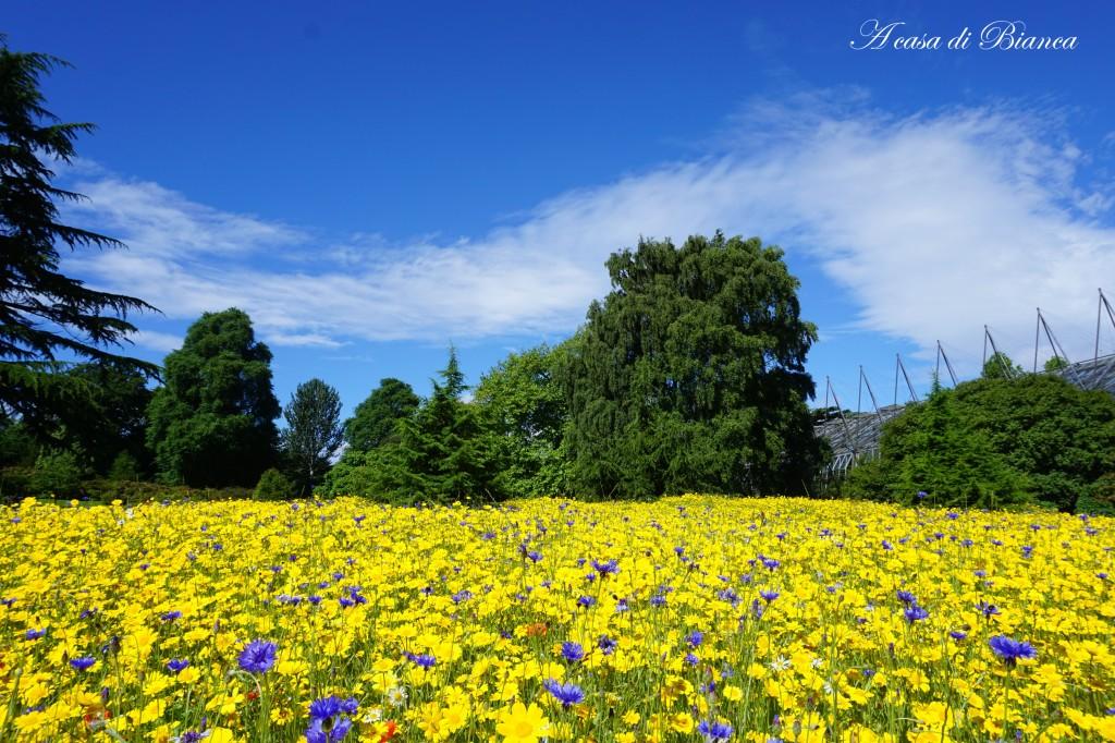 Prato in fiore al Royal Botanic Garden Edimburgo
