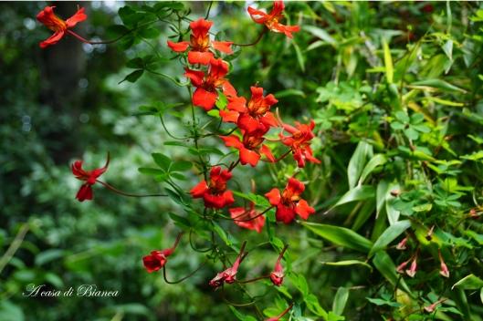 Fioritura al Royal Botanic Garden Edimburgo