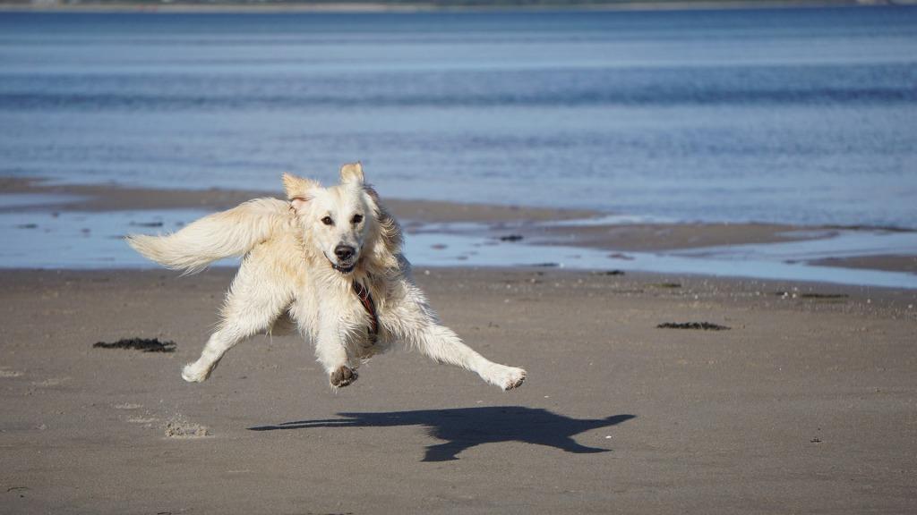 cane che gioca in spiaggia